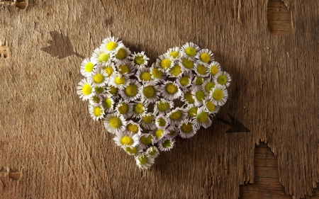 ➽♥ - daisies, heart, flowers, nature, camomille