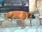 Boxer's Life