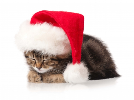 Cute Kitty - christmas, kitty, christmas cat, cat, xmas, cat face, merry christmas, magic christmas, kitten, cats