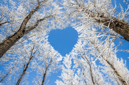 Winter nature backgrounds Fall winter Heart Desktop Nexus Nature winter Heart Winter Nature Background Wallpapers On Desktop