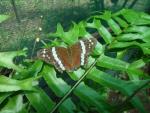 mariposa en elecho