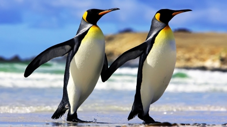 Penguin - beak, Penguin, love, animal