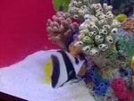 cute angel fish at sea world san diego