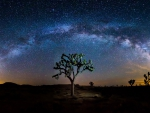 stars and the milky way above a desert