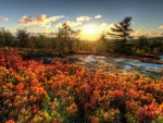 Acadia national aprk