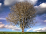 beautiful lonesome tree under huge sky