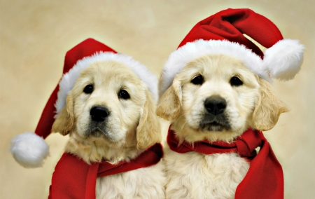 Ready for Santa - Dogs & Animals Background Wallpapers on ...