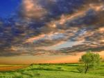 fields under beautiful sky