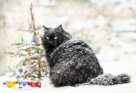 my kind of christmas christmas tree holidays snoflakes christmas adorable - Black Cat Christmas Tree