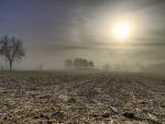 corn field in morning fog