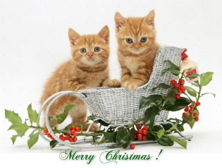 Merry Christmas Christmas Cats And Dogs Wallpapers And Images Desktop Nexus Groups