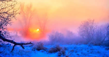 Winter - fence, sun, beautiful, sunset, clouds, snowy, splendor, beauty, sunrise, winter sun, lovely, view, colors, bench, winter time, sky, trees, winter splendor, winter, tree, snow, peaceful, nature, landscape