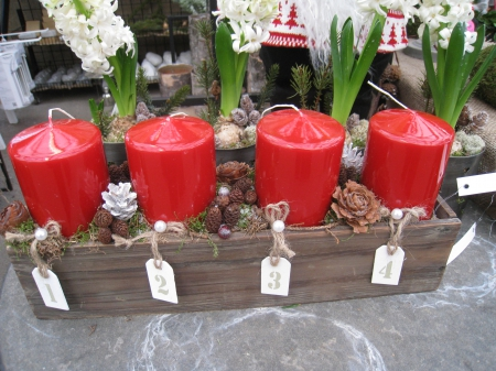 Advent Candles - red, christmas, flowers, pot, candles