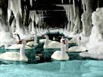 A Swans Life 2598x1729