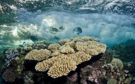 Fish among the Corals - Fish, Coral Reefs, Oceans, Underwater, Nature