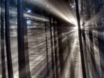 sunbeams through a forest