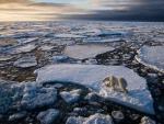 polar bear on an ice float