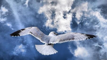 ผลการค้นหารูปภาพสำหรับ seagull fly hdr in the sky
