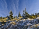 frosty grass and trees on a hillside