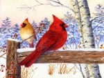 ★Cardinal Pair with Birch★