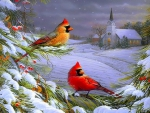 ★Cardinals in Winter★