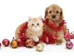 Cute Christmas Pets