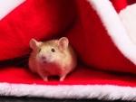 Santa's Helper :)