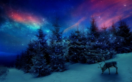 Christmas Forest.Christmas Forest Winter Nature Background Wallpapers