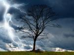 Tree in Storm!