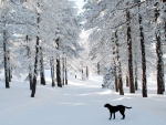 Barking In A Winter Wonderland