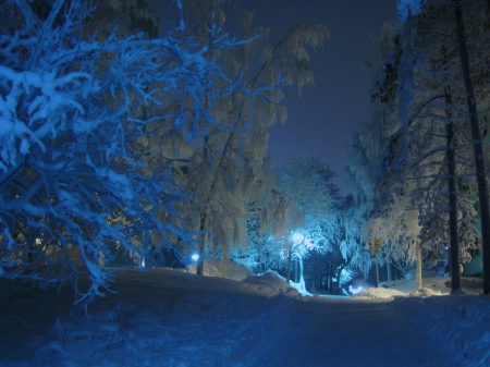 Winter Forest At Night Winter Amp Nature Background