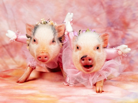 we hate ham an bacon - cute, outfits, adorable, piglets