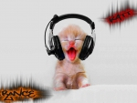 trance cat