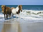 Beach Buddies