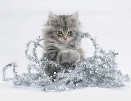 Christmas kitty with a tinsel - Christmas, kitty, tinsel, cats, animals