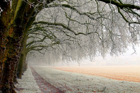 Winter - snow, nature, winter time, trees, winter, landscape