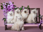 Kittens photo models