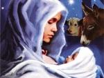 ✿ Christmas Miracle ✿