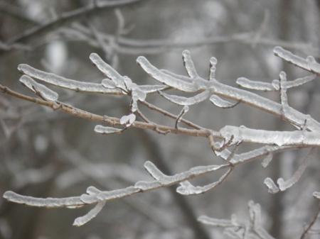 ice storm - tree, storm, cold, ice