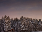 cabin in an evergreen forest at winter
