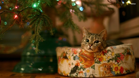 Cute kitty.. - cute, christmas tree, santa, christmas, kitty, cat, kitten