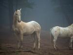 horses colorado