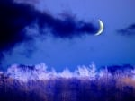 WINTER CRESCENT