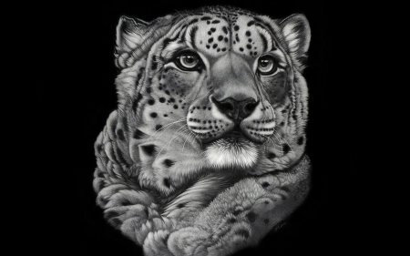 leopard art - leopard, cunning, special, black and white, beautiful, camouflage, eys, predator, photography, big, jungle, photoshop, portrait, camaflauge