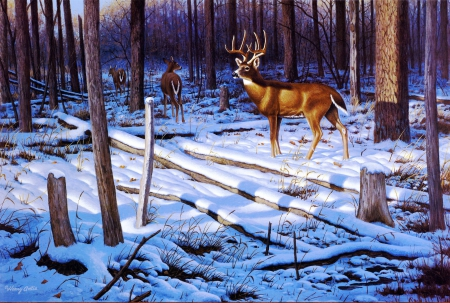 Deer in Winter - fence, forest, snow, trees, artwork