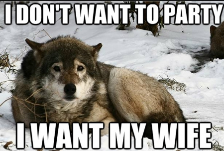 lone wolf - Motivational Quotes Wallpapers and Images ...