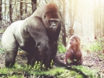 gorilla and child