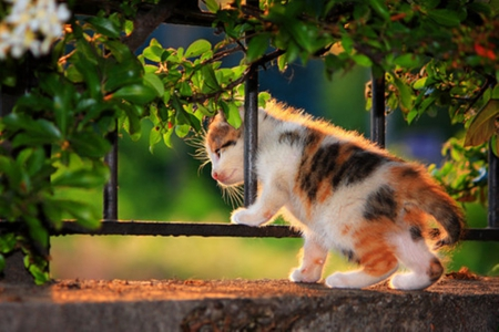 cute kitty - cute, cool, photography, cats, animals