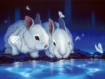 ★Cute Rabbits & Butterflies★