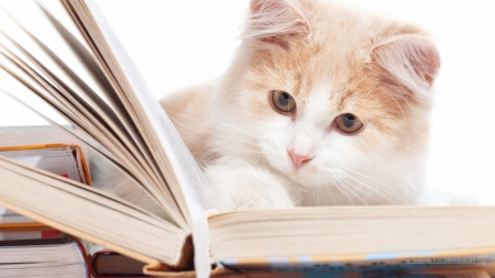 Studious Kitty! - kitty, studing, book, cat, cute, reading, studious, kitten, cats